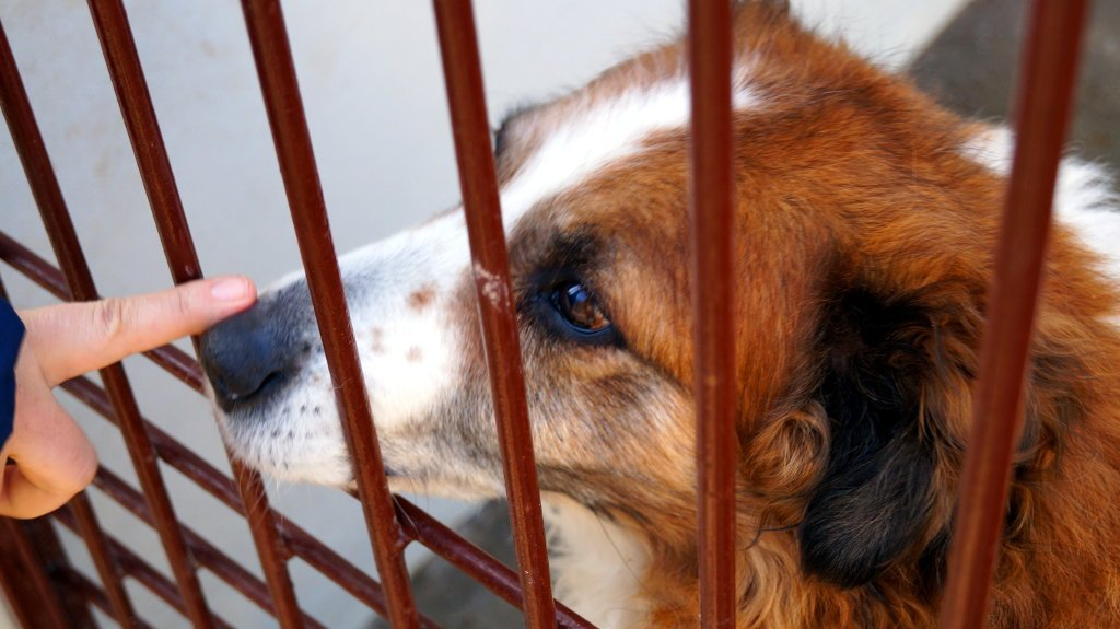 Pies czekający na adopcję w schronisku